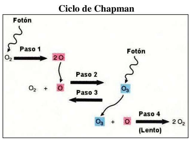 ciclochapman